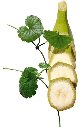 綠香蕉和老虎草植物